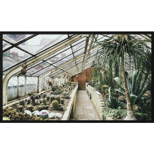 Wandkraft Painting forex Old greenhouse 118x70cm