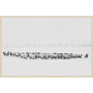 Wandkraft Schilderij forex Kudde 148x98cm