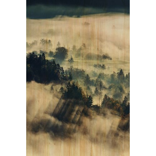 Wandkraft Painting birch wood Clouds 148x98cm