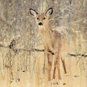 Wandkraft Gemälde Birkenholz Hirsch 74x74cm
