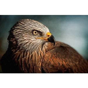 Wandkraft Malglas Vogel 148x98cm