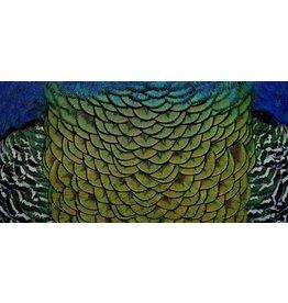Wandkraft Schilderij dibond rvs  Sierlijk  98x48cm