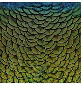 Wandkraft Painting dibond stainless steel Feathers 74x74cm