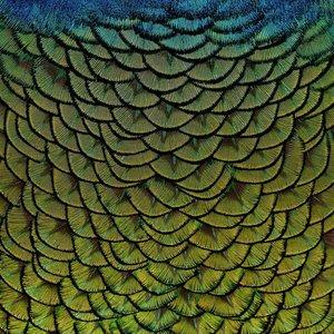 Wandkraft Schilderij dibond rvs  Veren 74x74cm