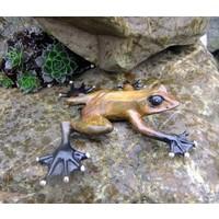Beeld brons regenwoudkikker