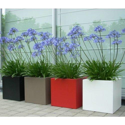 Adezz Producten Planter Boxwood polyester satin Adezz in many sizes