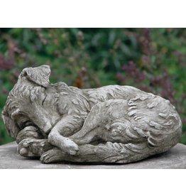 Dragonstone collie puppy