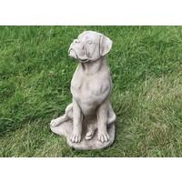 Große Boxerhund