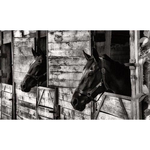 Alu-Dibond Malerei 118x70cm Pferde