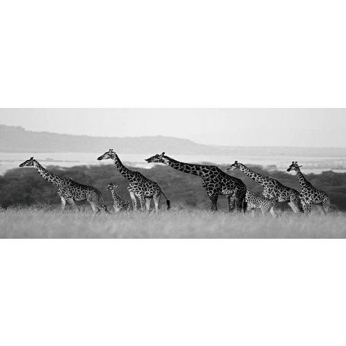 Glasmalerei 60x160cm Giraffen
