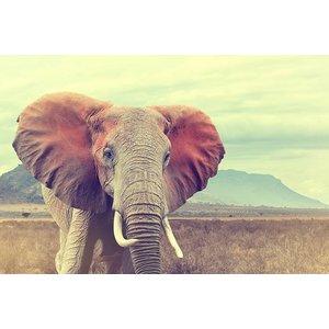 MondiArt Glass painting Elephant large 80x120cm