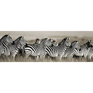 MondiArt Glasmalerei Gruppe von Zebras 50x150cm