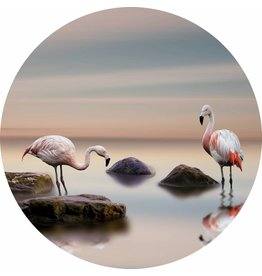 Gave Glas schilderij rond Flamingo's diameter 80cm