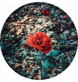 Gave Glas schilderij rond Roos diameter 80cm