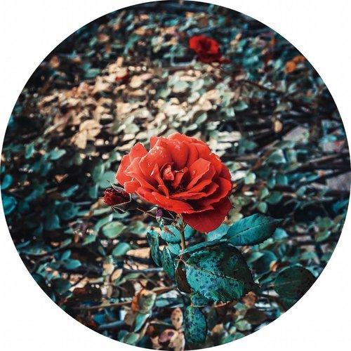 Gave Glass painting around Rose diameter 80cm