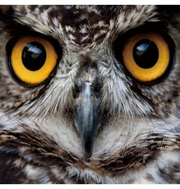 MondiArt Glass painting 80x80cm Owl close up