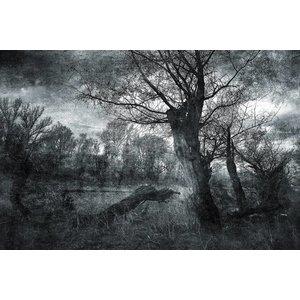 Gave Malerei Glas 80x120cm Alter Baum