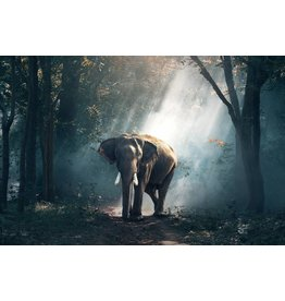 Wandkraft Glass painting Elephant in light beam 148x98cm