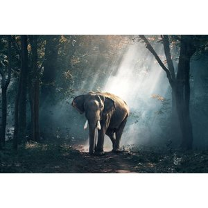 Wandkraft Glass painting Elephant in light beam 148x98cm