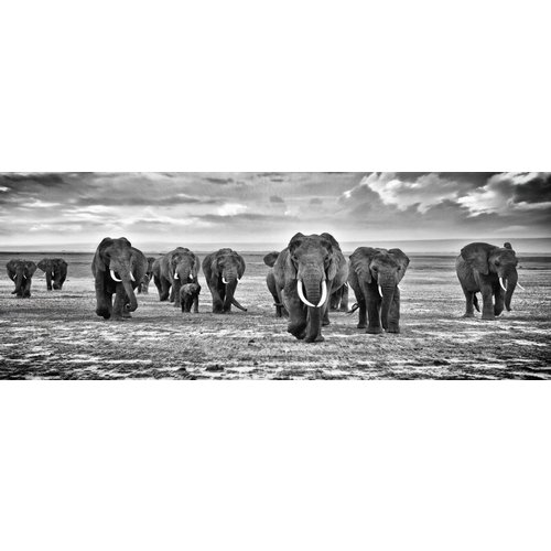 Eliassen Painting glass Herd of Elephants 160x60cm