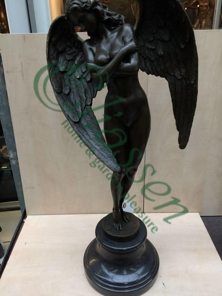 Bronze Winged Nacht