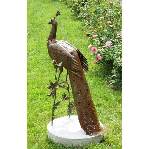 Eliassen Peacock sehr exklusiv