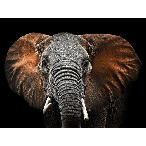Glasmalerei 80x120cm Elefanten Ohren groß