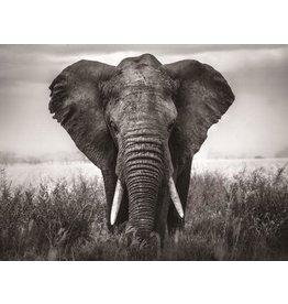 Malglas 110x160cm Elefant schwarz und weiß