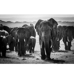 Glass painting Elephants herd 110x160 cm