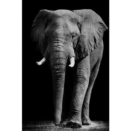MondiArt Dibond malt Elefanten groß