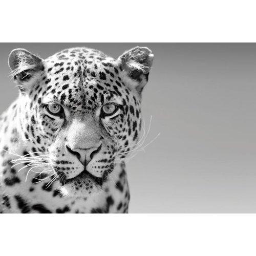 Glasmalerei Panther weiß 80x120cm