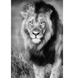 Glass painting Lion walking 80x120cm