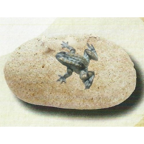 Mini bronze frog on boulder