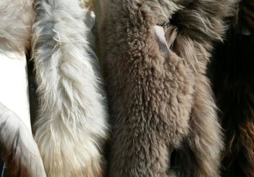 Coats and Skins