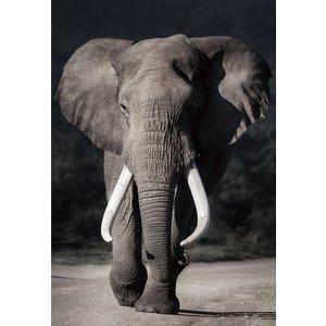Glass painting 110x160 cm. Elephants