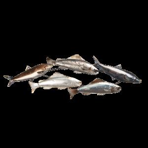 Wanddeco vissen