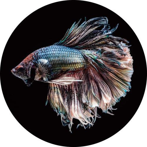 painting around glass Fish 100cm