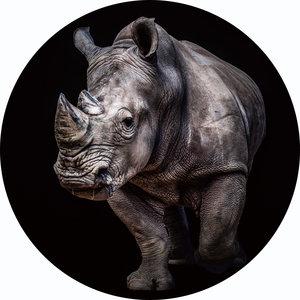 painting around glass Rhino 100cm