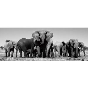 Glasschilderij 60x160 cm Kudde olifanten