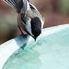 Vogeldrinkschalen