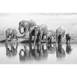 Glasschilderij 80x120 cm. Olifanten bij het water