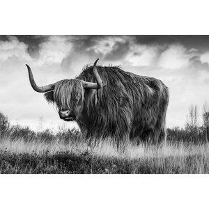 Glasmalerei 120x80 cm Büffel
