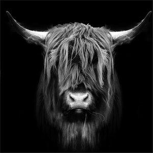 Glasschilderij 80x80 cm Buffel in het zwart