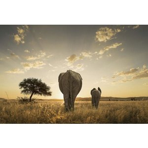 Glasmalerei Elefanten Rückseite