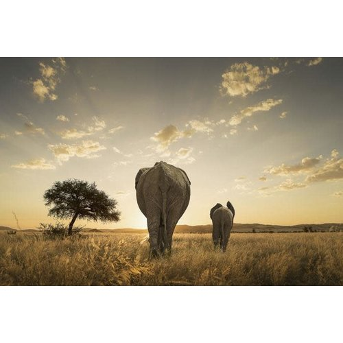 Glass painting Elephants backside