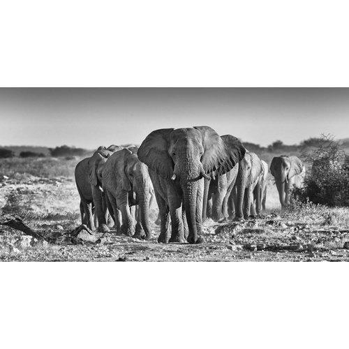 Glasschilderij Olifanten kudde grijs 80x160cm