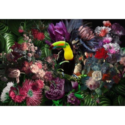 Glasschilderij Toekan jungle 80x120cm.