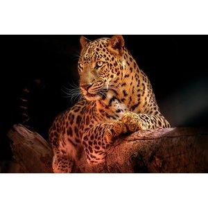 Glasschilderij Panther 110x160cm.