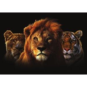 Glasschilderij Trio katten 110x160cm.