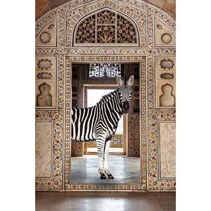 Glasschilderij Zebra in living 80x120cm.